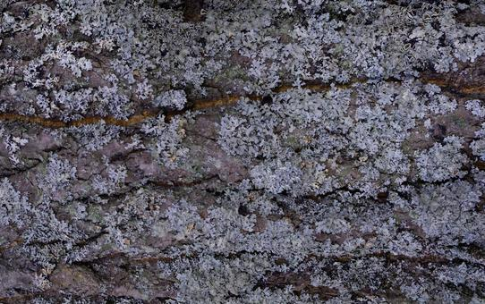 Nature Canadian Forest Tree Bark