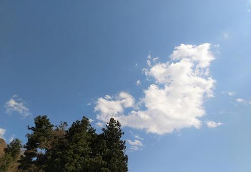 구름과 침엽수와 푸른 하늘
