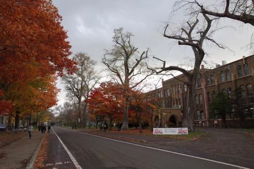 Hokkaido University 7