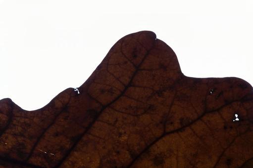 낙엽 잎 시설 5