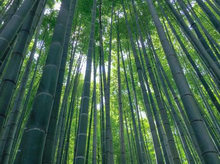 BambooForest