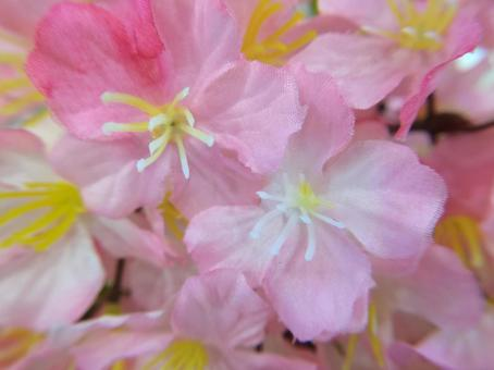 벚꽃의 조화의 접사 (계절)