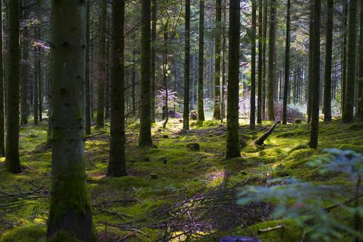 덴마크 신비의 숲
