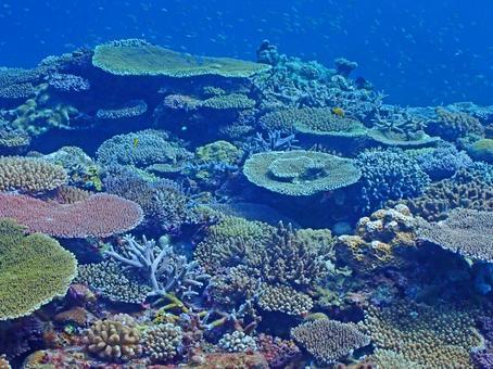 Mysterious seabed, Kerama Islands coral reef (Okinawa)