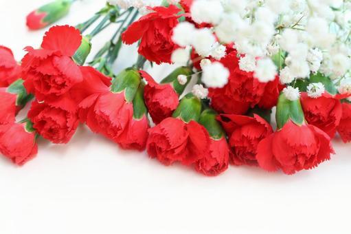 Carnation frame 1
