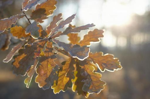 Autumn leaves leaves 3