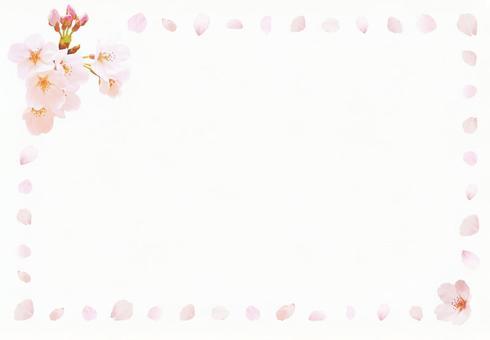 Sakura Material _ Postcard (PSD)