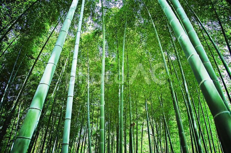 竹林4の写真