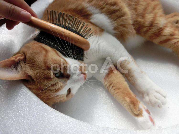 猫のブラッシング3の写真