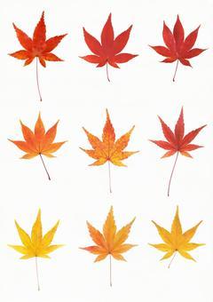 Cutout material Autumn leaves leaf set 5