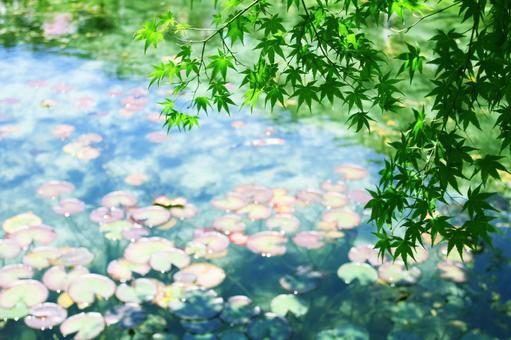 기후현 이타 도리 모네의 연못 04