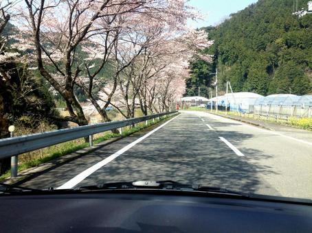 Kurama 9