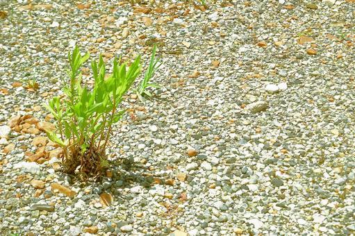 Summer grass of dry ground # 12