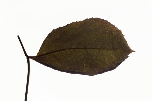 낙엽 한 장 잎 2