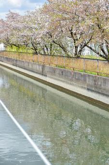 見沼 용 하늘색의 봄