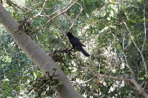 Pakistan bird 16