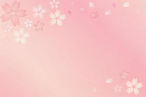 Sakura gradation