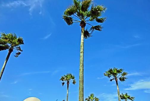 Palm grows