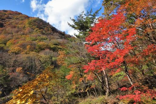 Autumn leaves 32 sunny autumn