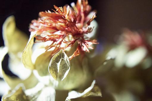 Safflower / dried flower