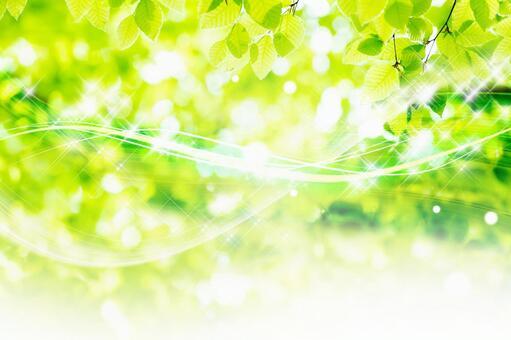 風橫穿的山毛櫸森林_5