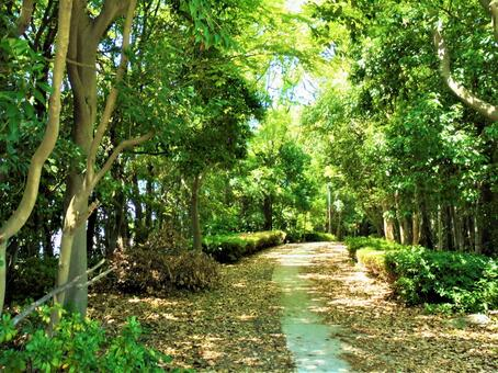Forest Path-11