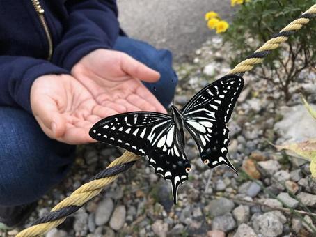 우화 후 호랑 나비