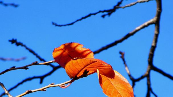 Autumn sky and dead leaves