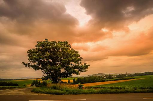 세븐 스타의 나무와 흐린 하늘 (홋카이도 비 에이 쵸)
