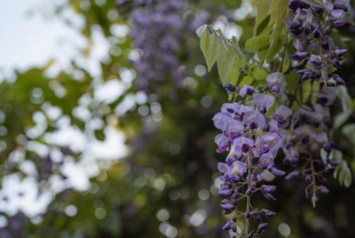 후지의 꽃