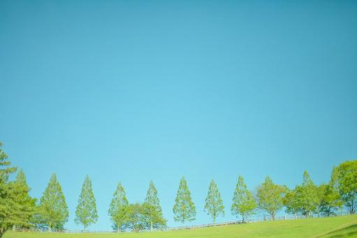 Blue sky and trees 5