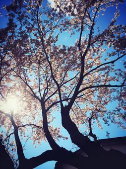 봄의 햇살