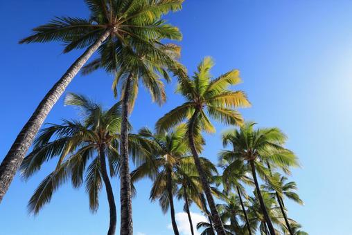 Beautiful landscape of Hawaii Island, Kohala Coast, Waikoloa