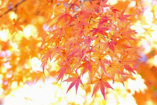 Autumn leaves-92