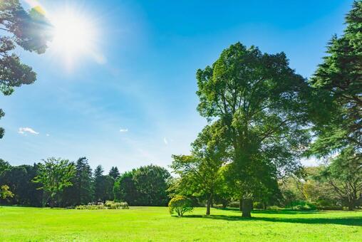 藍天和樹木