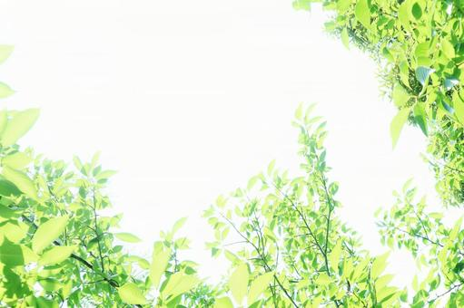 Sunlight through the trees Glittering trees