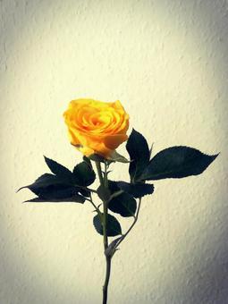 一朵黃玫瑰