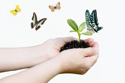 Shoots of the palm and multiple butterflies