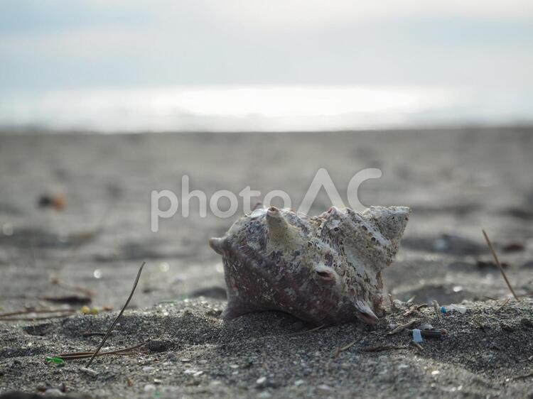 浜辺の写真