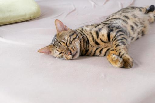 夏バテでグダグダのベンガル猫