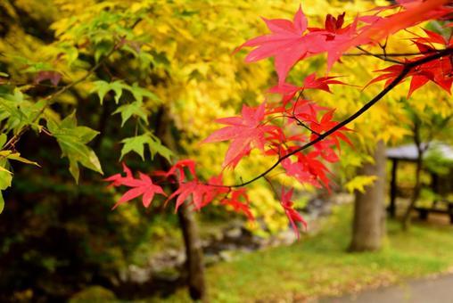 Autumn leaves in Japan (Hida Takayama)