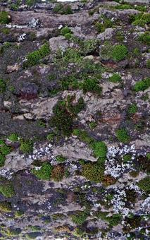 Tree with mossy bark Vertical