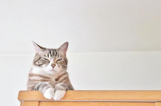 「猫 画像 フリー」の画像検索結果