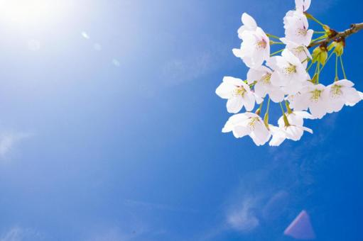 Sakura and the blue sky