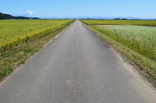Paved farm roads and rural landscape