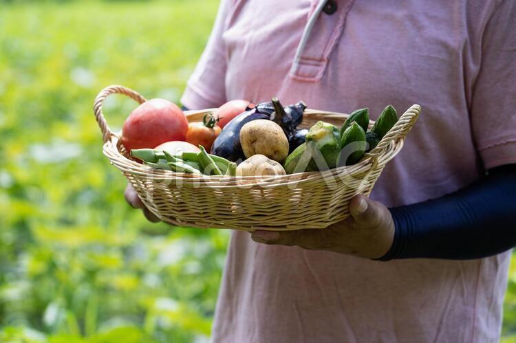 野菜を持つ中高年の男性の写真