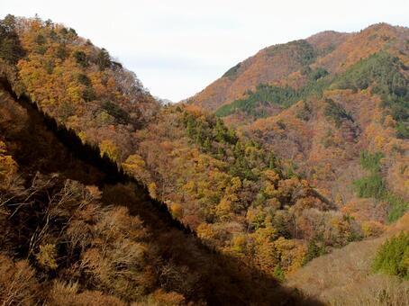 만추의 안쪽 치치의 산과 숲