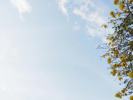 푸른 하늘과 코가네노우젠