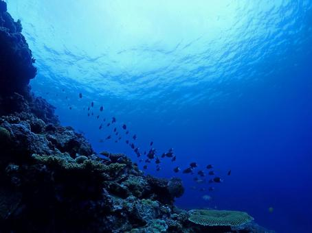 Mysterious blue, the seabed of Onna village (Okinawa)