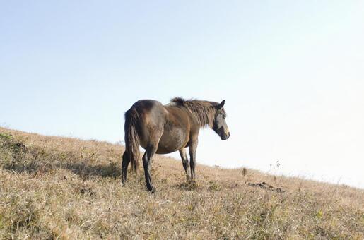 野生馬12